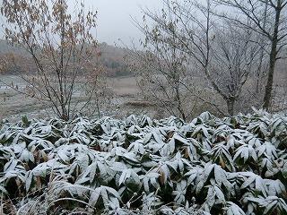 雪へ_d0122374_17541910.jpg