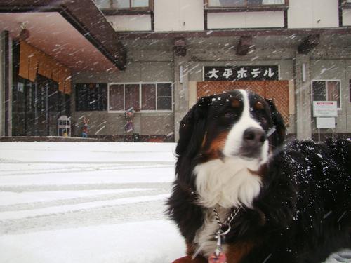 蔵王温泉 初雪!_b0185375_1411419.jpg