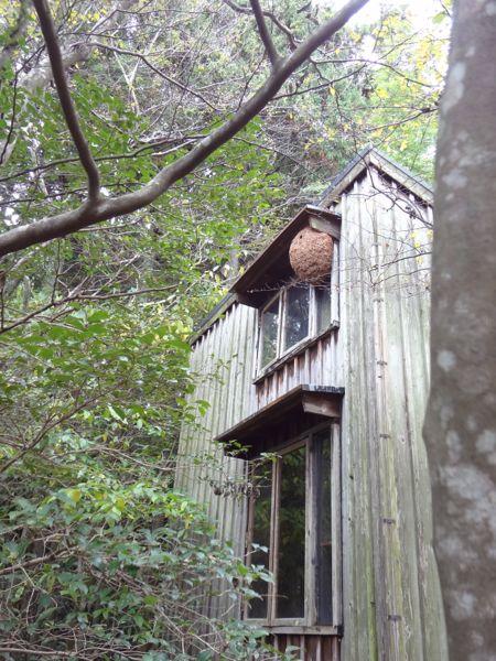 スズメバチの巣_c0169176_16322584.jpg