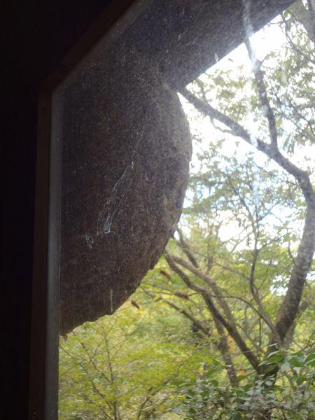スズメバチの巣_c0169176_16323095.jpg