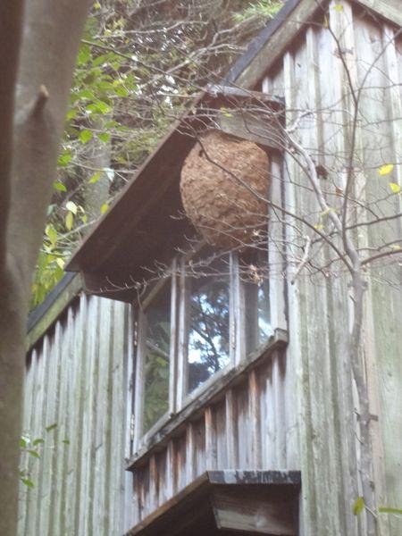スズメバチの巣_c0169176_16323812.jpg