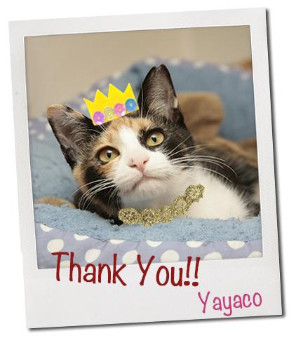 矢也子の家族が決まりました!_c0223478_17293640.jpg