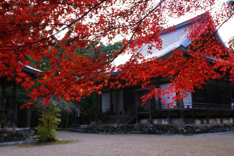 神護寺_e0051888_4442124.jpg