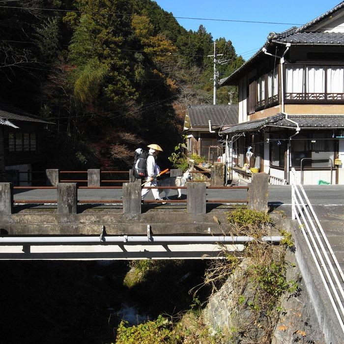 Memory of the second pilgrimage with husky HANA_c0049299_1756242.jpg