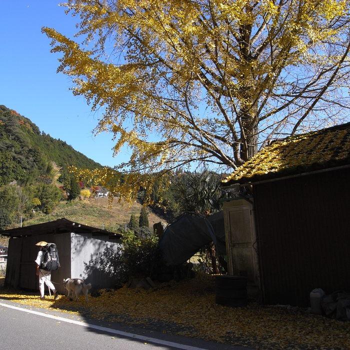 Memory of the second pilgrimage with husky HANA_c0049299_17583529.jpg