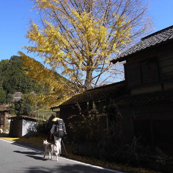 Memory of the second pilgrimage with husky HANA_c0049299_175838.jpg