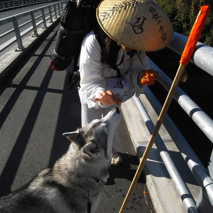 Memory of the second pilgrimage with husky HANA_c0049299_17594020.jpg