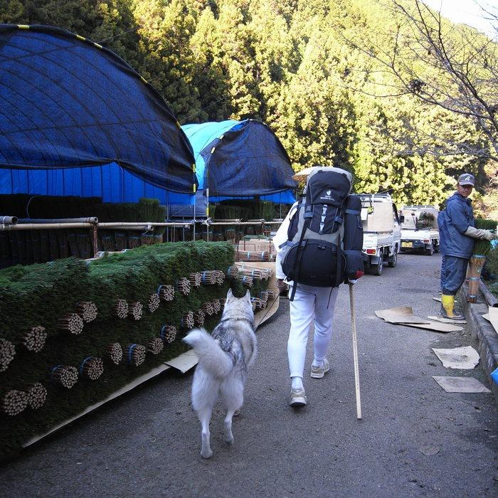 Memory of the second pilgrimage with husky HANA_c0049299_1813182.jpg