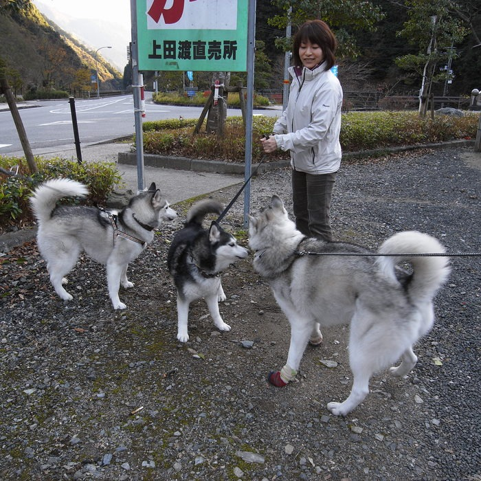 Memory of the second pilgrimage with husky HANA_c0049299_1835693.jpg