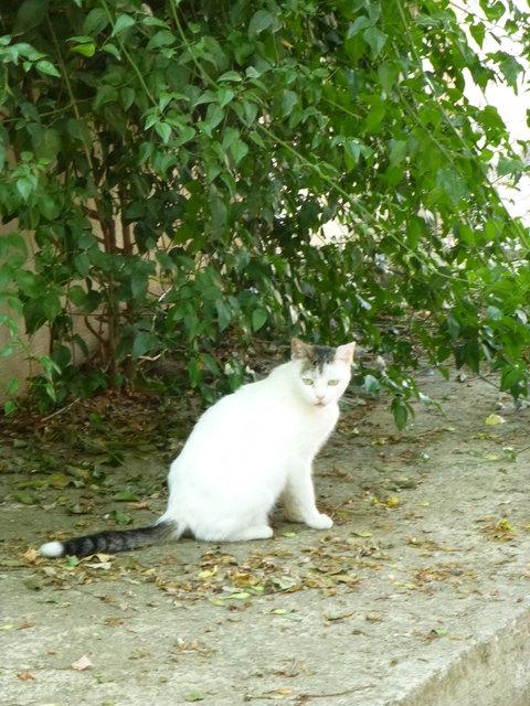 世界の猫 写真館 ギリシャ アテネ編_e0237625_1252296.jpg