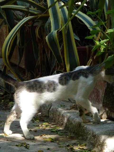 世界の猫 写真館 ギリシャ アテネ編_e0237625_12541240.jpg