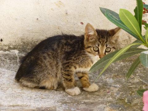 世界の猫 写真館 ギリシャ アテネ編_e0237625_12544459.jpg