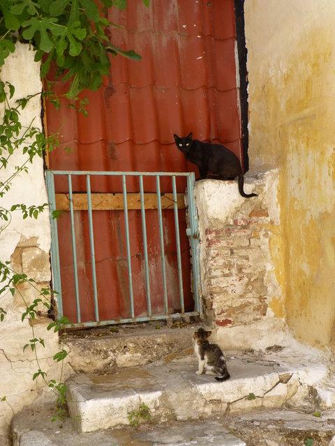 世界の猫 写真館 ギリシャ アテネ編_e0237625_12552374.jpg