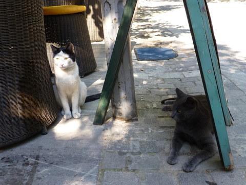 世界の猫 写真館 ギリシャ アテネ編_e0237625_12571711.jpg