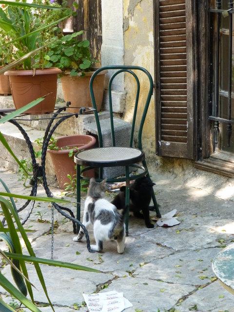 世界の猫 写真館 ギリシャ アテネ編_e0237625_12593454.jpg