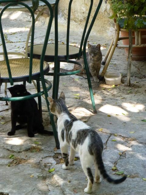 世界の猫 写真館 ギリシャ アテネ編_e0237625_1302238.jpg