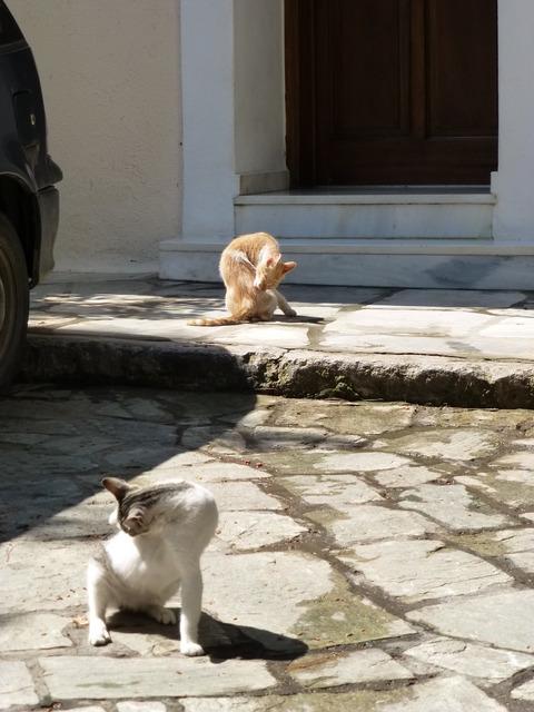 世界の猫 写真館 ギリシャ アテネ編_e0237625_1311771.jpg