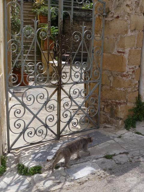 世界の猫 写真館 ギリシャ アテネ編_e0237625_13132634.jpg