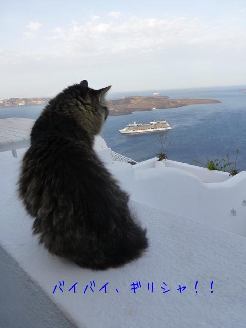 世界の猫 写真館 ギリシャ アテネ編_e0237625_1321288.jpg