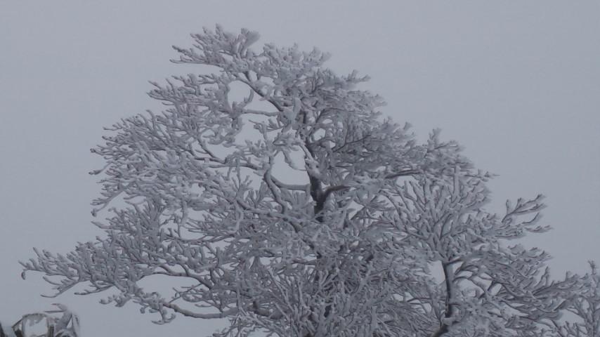 初冠雪! …やったね!_f0101226_19251933.jpg