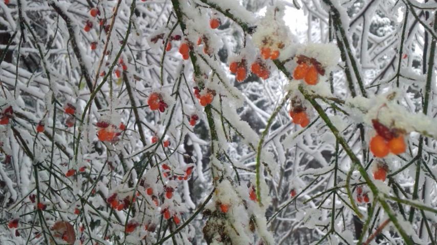 初冠雪! …やったね!_f0101226_19281676.jpg