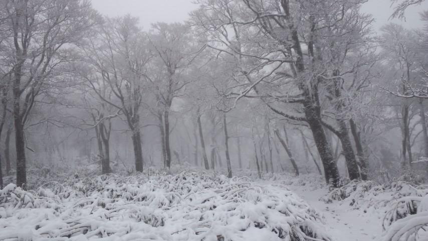 初冠雪! …やったね!_f0101226_19382067.jpg