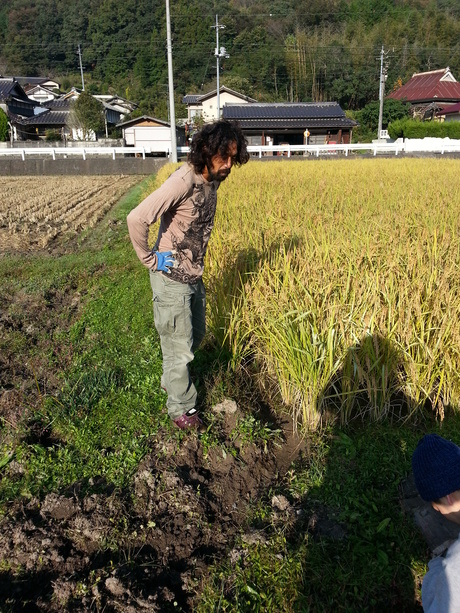 岡やーまん 稲刈り_c0226146_1413951.jpg