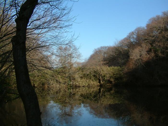 ひどい、台峯・谷戸の池が本当の蓮田になっちゃった10・26_c0014967_21422979.jpg