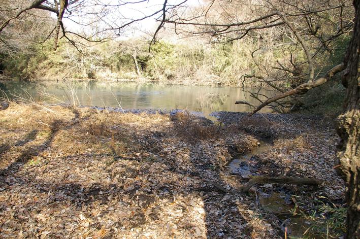 ひどい、台峯・谷戸の池が本当の蓮田になっちゃった10・26_c0014967_21425281.jpg