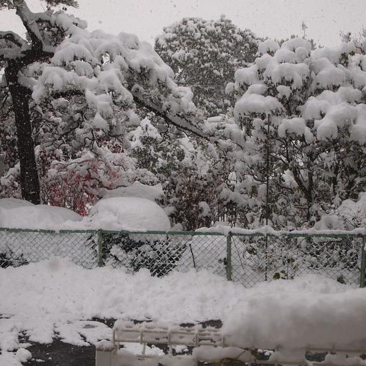雪景色&ナスタチュームのタネ_a0292194_109283.jpg