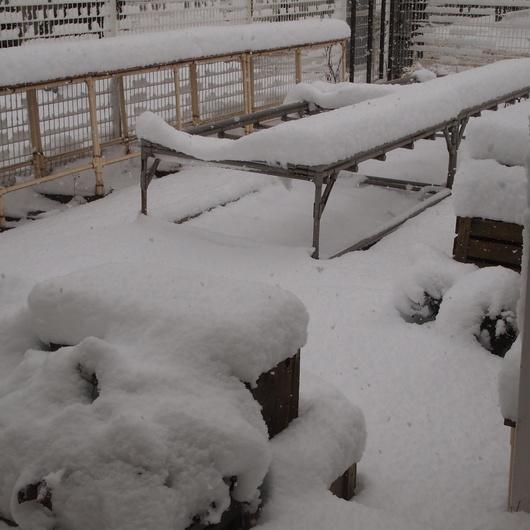 雪景色&ナスタチュームのタネ_a0292194_1094479.jpg