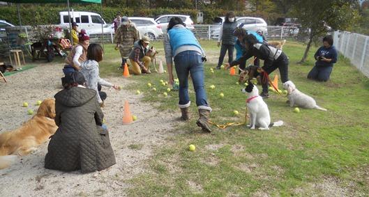 犬も運動会シーズン_f0221707_18215153.jpg