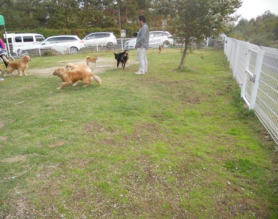 犬も運動会シーズン_f0221707_18262598.jpg