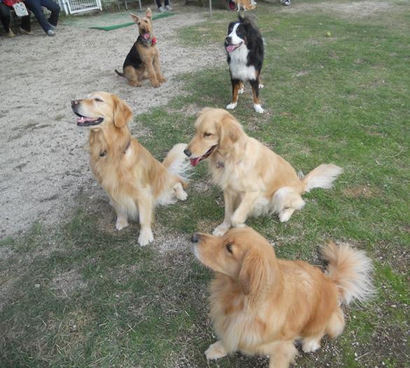 犬も運動会シーズン_f0221707_18263840.jpg