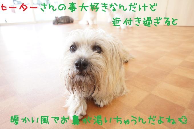 d0220513_1911614.jpg