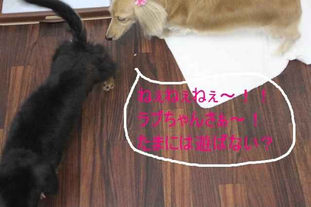 b0130018_032113.jpg