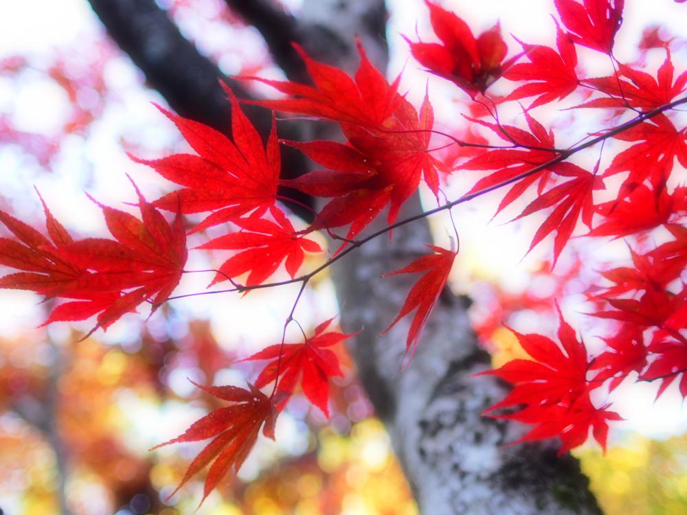 紅葉の美_e0169421_20513152.jpg