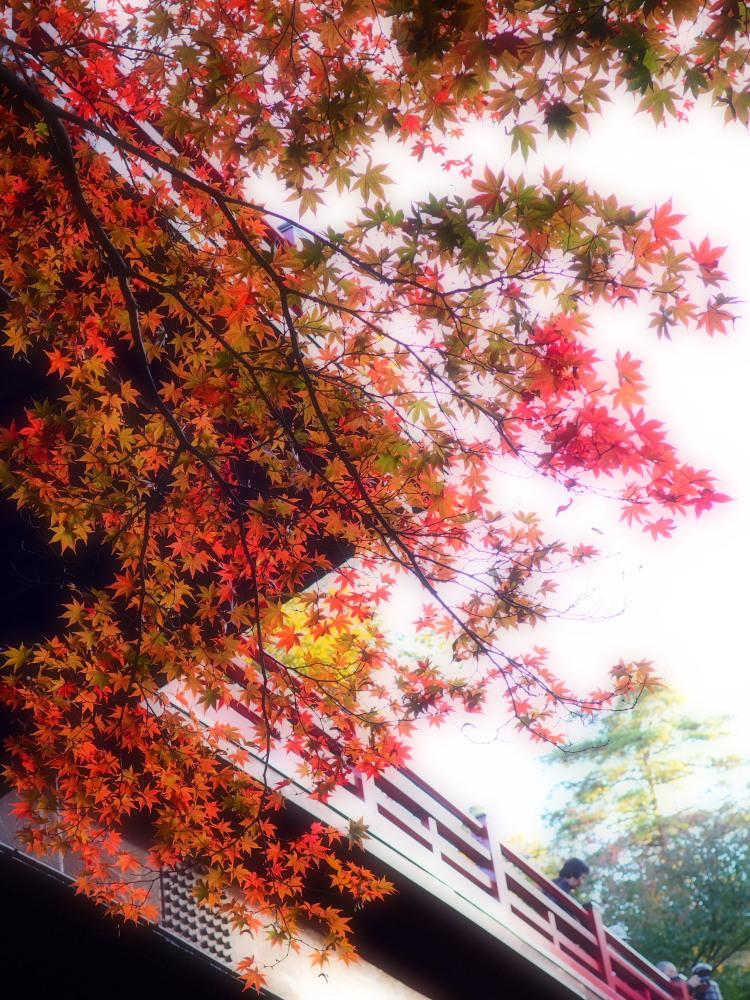 紅葉の美_e0169421_20513643.jpg