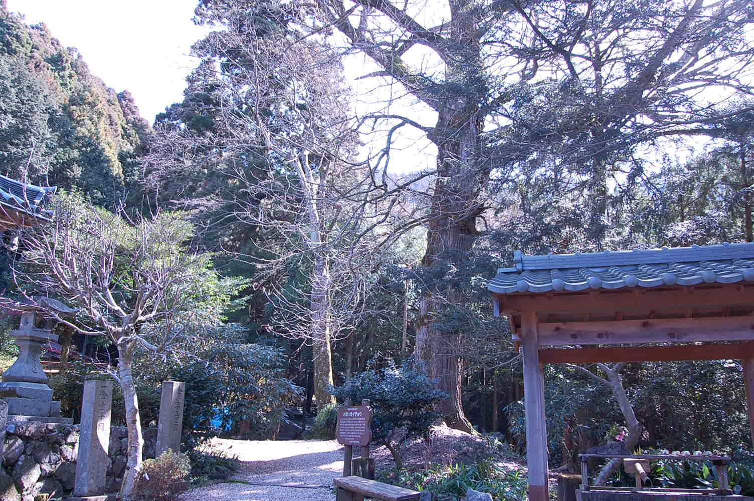 多武峰の尼寺のお葉つき銀杏まつり_a0237937_15114260.jpg