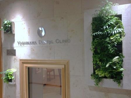診療室 緑化計画_b0190560_211463.jpg