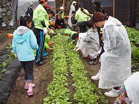 広島と福島の子供たちの収穫体験_e0175370_9234625.jpg