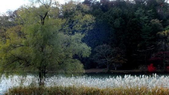 志高湖・神楽女湖に行ってきました_b0214473_13453861.jpg