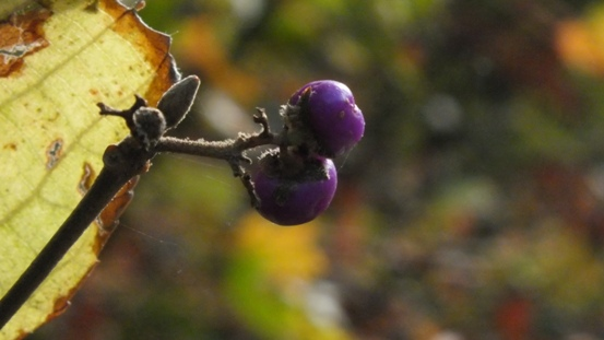 志高湖で出会った植物_b0214473_1942418.jpg