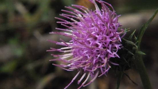 志高湖で出会った植物_b0214473_1951378.jpg