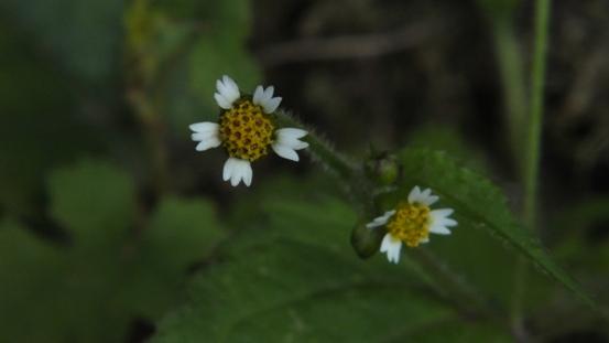 志高湖で出会った植物_b0214473_197528.jpg