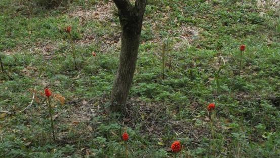 志高湖で出会った植物_b0214473_1982861.jpg
