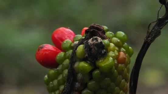 志高湖で出会った植物_b0214473_1984039.jpg