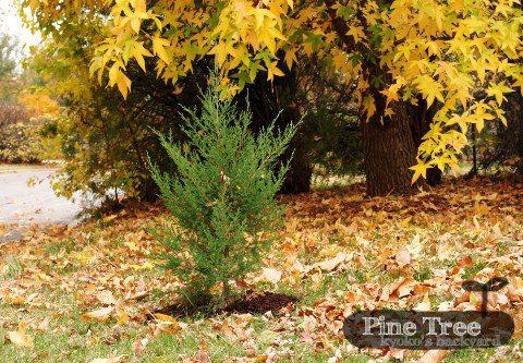 秋から冬へ_b0253205_24524.jpg