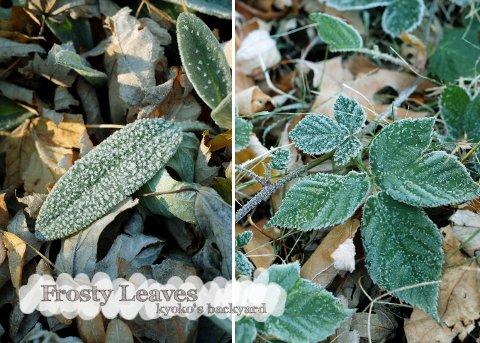 秋から冬へ_b0253205_245937.jpg