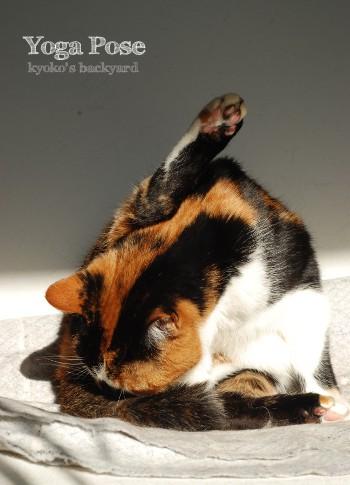 猫のヨガポーズ_b0253205_29262.jpg